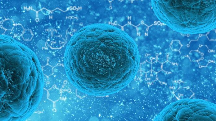Foto-als-info-2017-09-26-FDA-stemcells